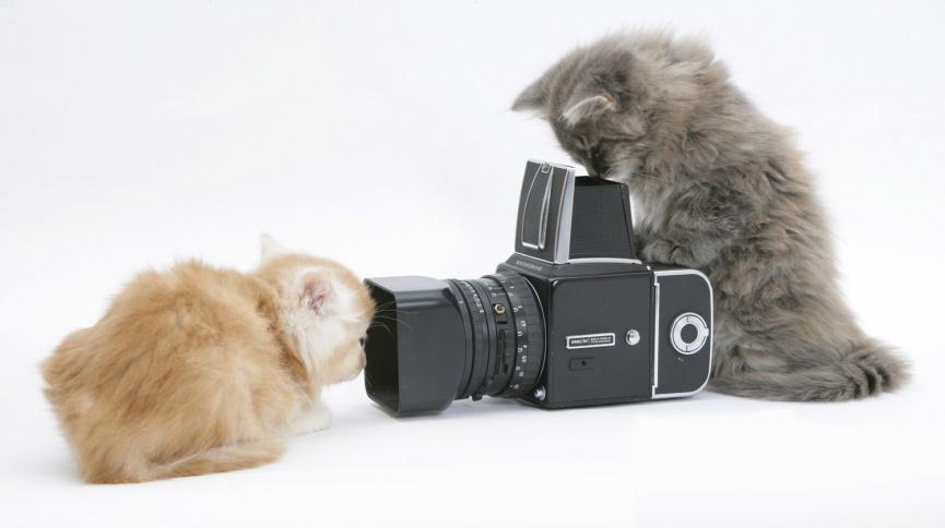 Что нужно знать при фотографировании своего питомца?