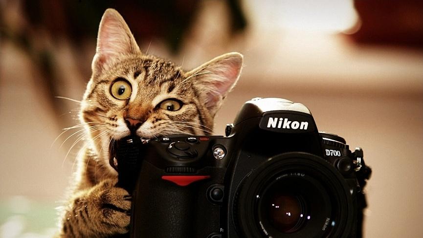 Несколько советов молодым фотографам