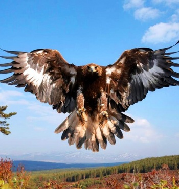 Фото дня: Золотой орел
