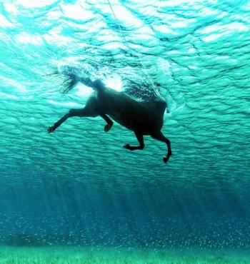 Фото дня: Плавающая в океане лошадь