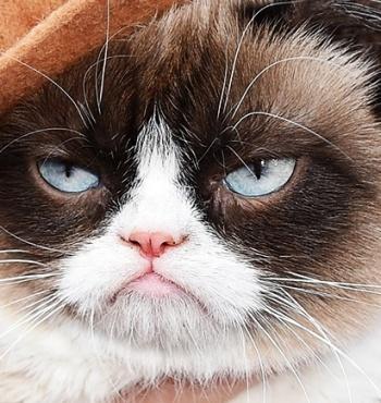 В Нью-Йорке состоялась презентация книги знаменитой кошки Grumpy Cat
