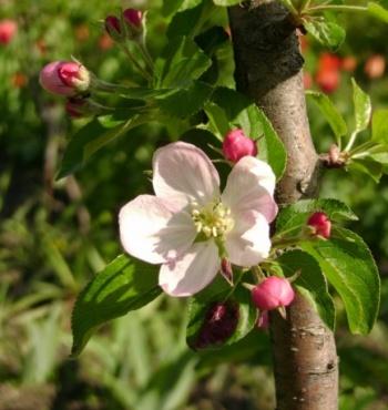 Заботимся о своём саде начиная с весны