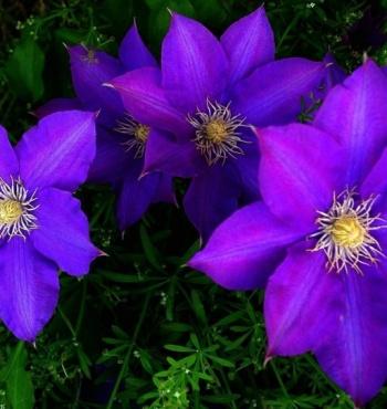 Красиво цветущие растения
