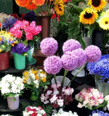 Как правильно выбирать цветы?